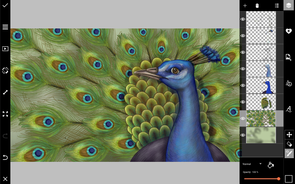 how to draw a peacock head