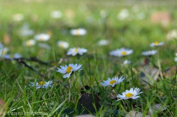 spring flower photography blossom