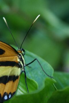 photography nature macro butterflies mysanctuary