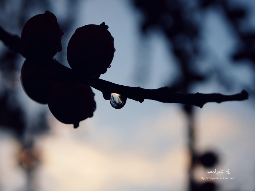 """""""Have a great time to you all"""" see u tomorrow  #plant #nature #silhouette #photography #rain"""