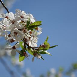 fr apfel spring