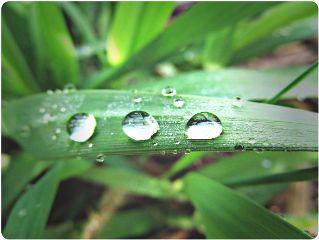 macro photography hdr nature rain