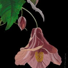 drawing digitalart draw art flower
