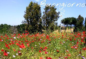 buongiorno goodmorning flower papaveri cielo