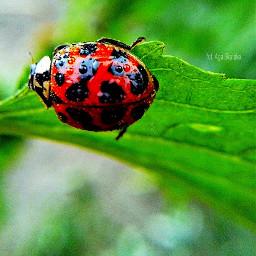 nature ladybird