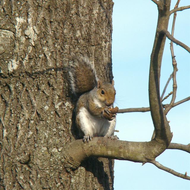 For  #dailytag #nuts  #bark  #petsandanimals  #nature