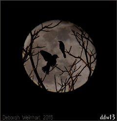 moon birds sillouette night nature