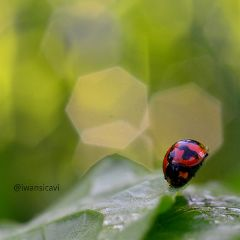petsandanimals bugs nature bokeh photography