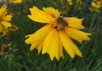 interesting bee insect yellow flower