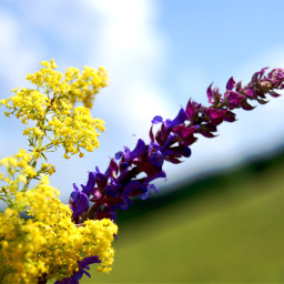 photography flower nature colorful summer