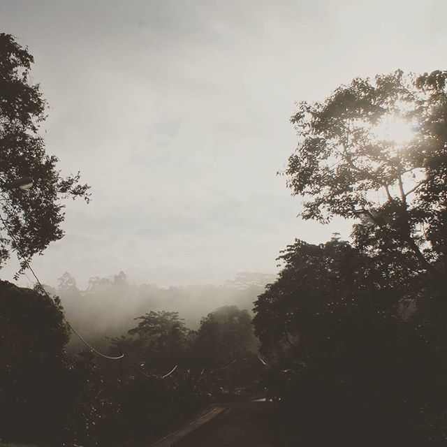 #nature  #morning #sepia  #nature #oldphoto #oldphoto #love