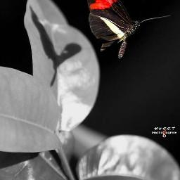 reflection lowangle stark butterfly nature