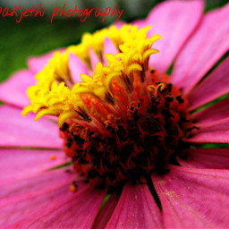 love photography nature flower hdr