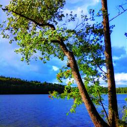 nature brandenburg wind
