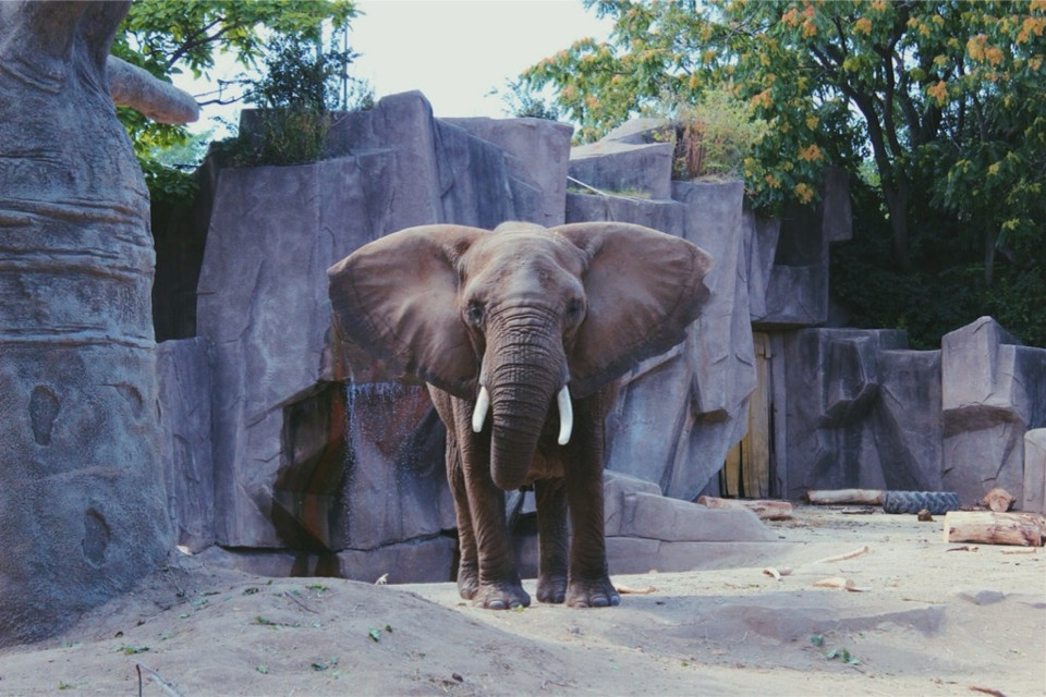 Elephants at the zoo.   #elephant #zoo #fall #september