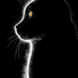 dcsilhouette art cat drawing pet