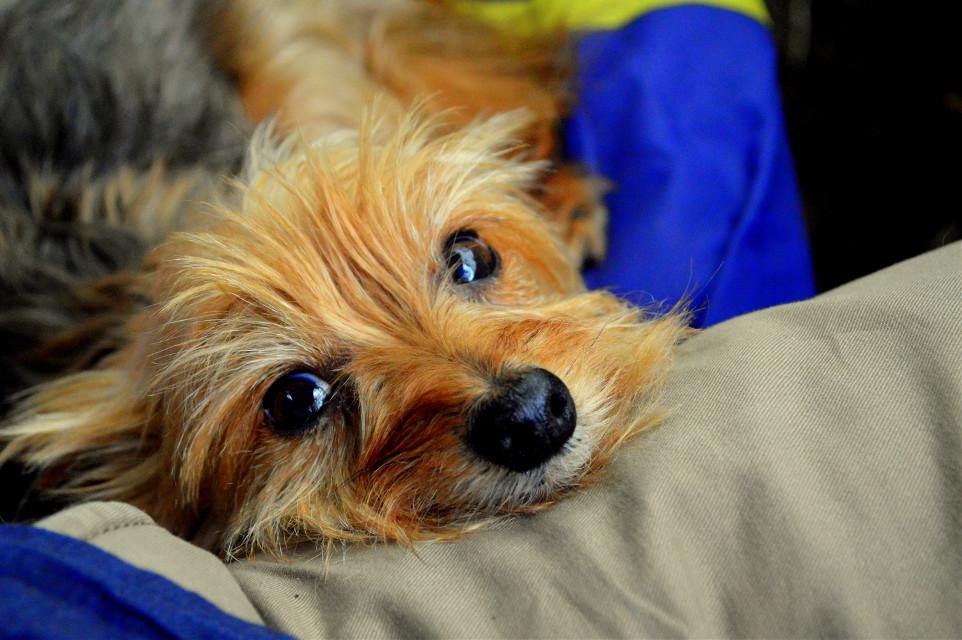 ♡ #dog #love #photography #summer #petsandanimals